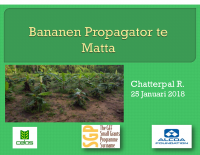 Bananen Propagator at Matta (DUTCH)